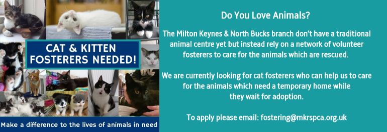 Cat and Kitten Fosterers Needed!