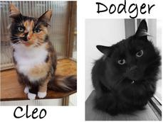 CLEO AND DODGER