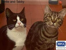 TABBY AND BERTIE
