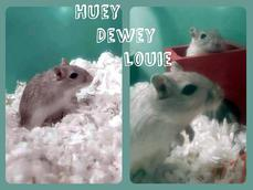 HUEY DEWY AND LOUIE