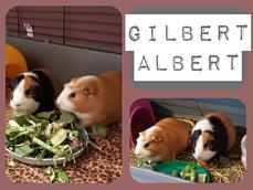 GILBERT AND ALBERT