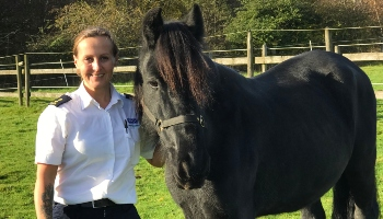 Horse Jet after coming into our care © RSPCA