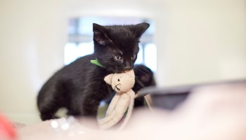 cats and wildlife rspca