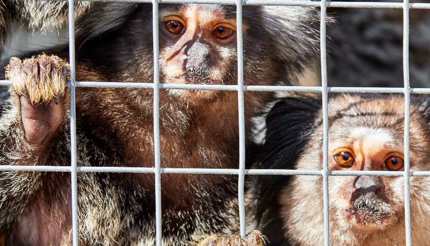 Marmosets rescued by officers © RSPCA
