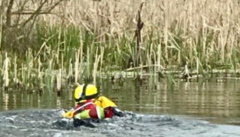 RSPCA Rescuer swimming out to trapped buzzard