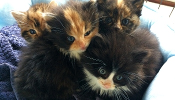 Kittens rescued after being abandoned © RSPCA