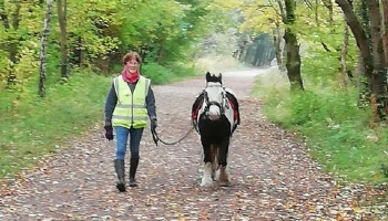Dave the pony on his walking journey © RSPCA