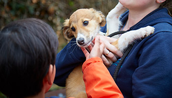 RSPCA Animal Action day for looked after children