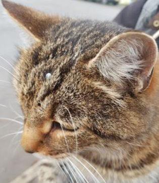 Children found local cat with tick on it's head