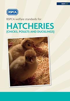 RSPCA welfare standards for hatcheries cover © RSPCA Farm Animals Department
