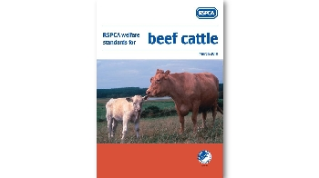 RSPCA welfare standards for beef cattle cover © RSPCA Farm Animals Department
