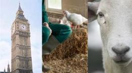 We work in many different ways to help farm animals © RSPCA Photolibrary