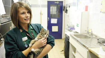 Vet Nurse Naomi Killingsworth holding kitten, Bluebell © Andrew Forsyth/RSPCA Photolibrary
