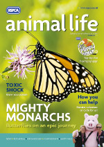 Animal Life magazine cover