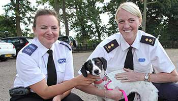 RSPCA Inspectors with rescue dog © RSPCA