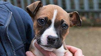 Crossbreed puppy being held © RSPCA
