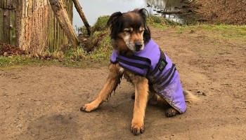 dog in winter jumpers rspca