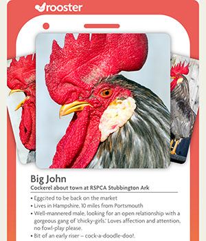cockerel tinder rspca