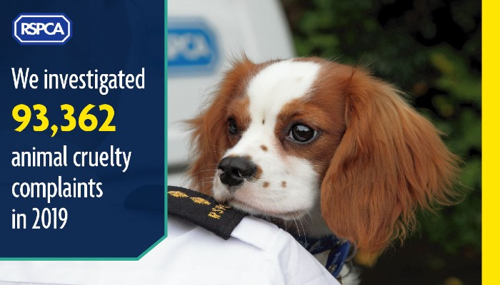 We investigated 93,362 animal cruelty complaints