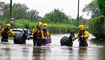 flood with animal rescue