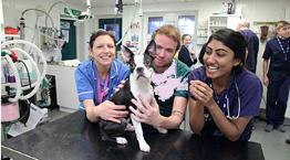 practical animal care rspca