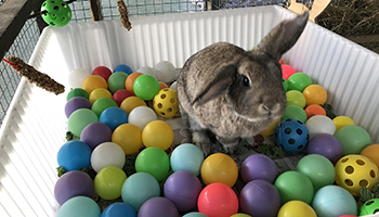 rabbit in ball pit