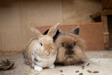 Find A Clinical Animal Behaviourist Animal Behaviour Experts