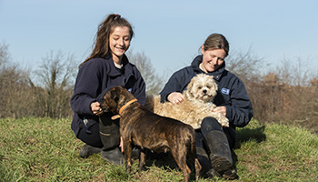 rspca dog training walkie talkies