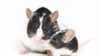 Two pet mice together