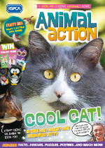 Animal action cover Autumn