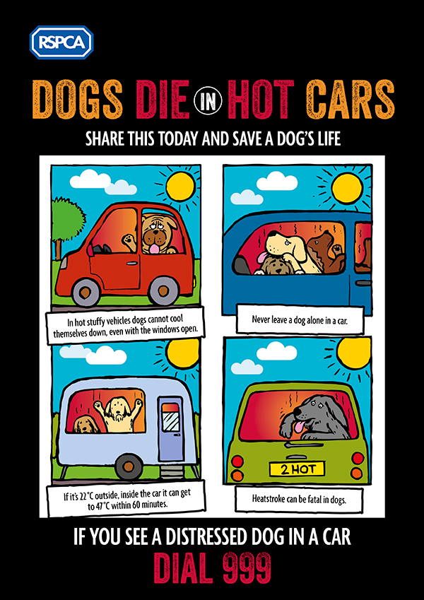 Dogs die in hot cars - share this today and save a dog's life. If you see a dog in a car on a warm day, call 999