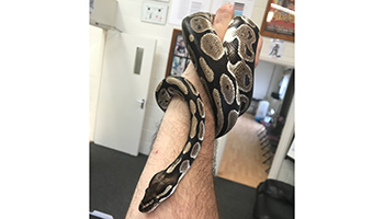 Python found in child nursery