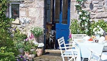 Labrador sitting on cottage doorstep