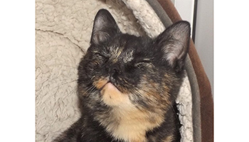Miracle the rare male tortoiseshell cat © RSPCA