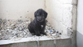 Puppy at a puppy farm