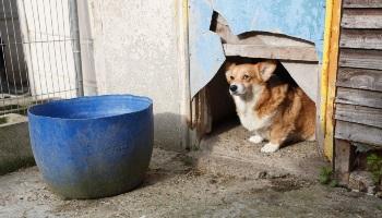Dog at an illegal puppy dealer