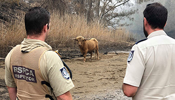 RSPCA NSW inspectors down in the south coast helping animals in need