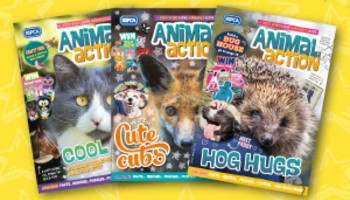 Selection of animal action covers