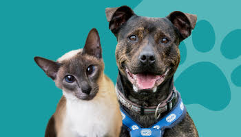 Cat and dog on a blue background © RSPCA