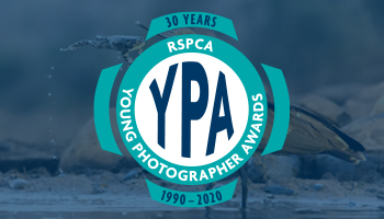 YPA logo over YPA 12-15 category winning photo by Daniel Zhang
