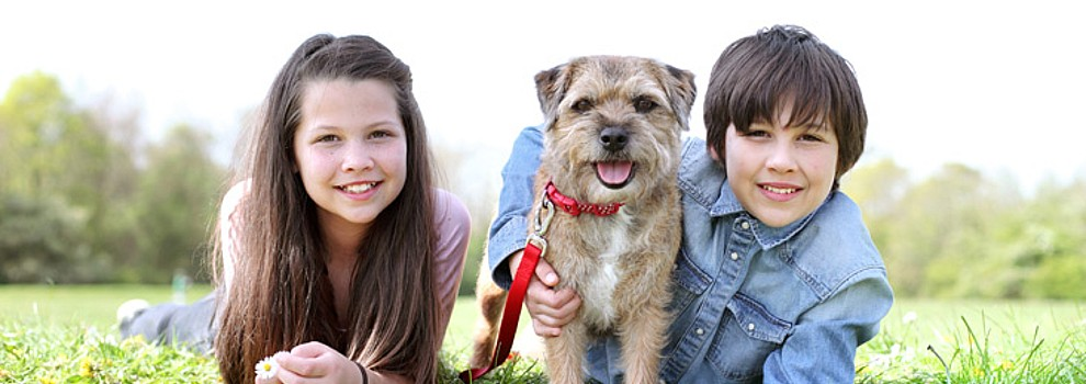 Young girl and young boy lying with border terrier dog outdoors © RSPCA photolibrary