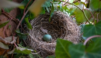 Bird nest with egg inside © Mateusz Stepien