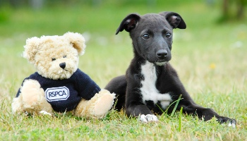 Dog next to an RSPCA teddy