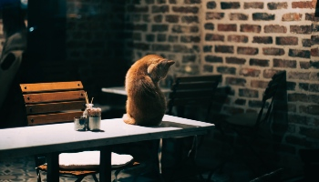 Cat on a desk by cihat özsaray