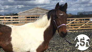 Adie the horse in our care © RSPCA