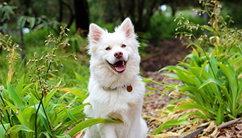 Happy dog in the woods © Spiritze