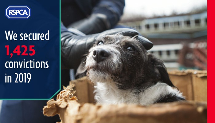 1,425 secured convictions in 2019 © RSPCA