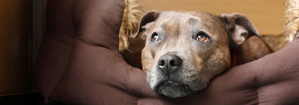 Dog looking sad © RSPCA