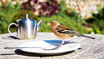 Wild bird on a coffee table outside © RSPCA