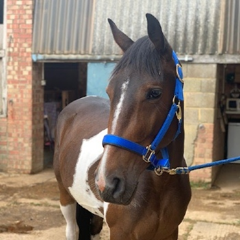 Frosty the horse after © RSPCA